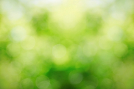 bokeh: Sunny abstract growing nature background with soft focus