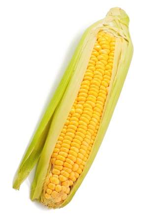 sweetcorn: Corn on the white background
