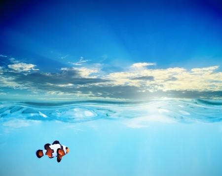 waterline: Clown fish in sunset sea Stock Photo