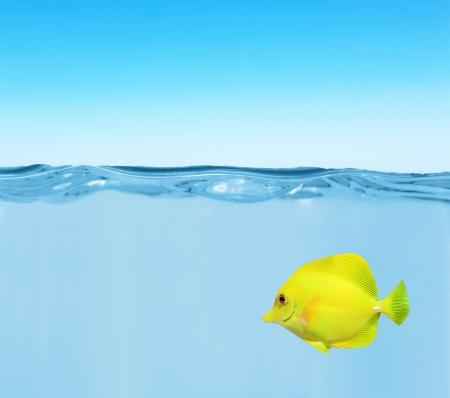 zebrasoma: Ocean water with zebrasoma fish and blue sky