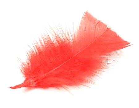 Red feather on the white background photo