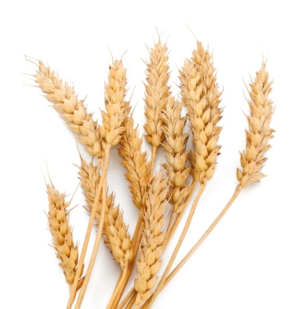 Wheat ears on white background photo