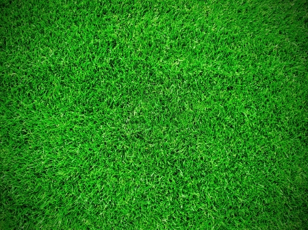 Football grass in the field photo