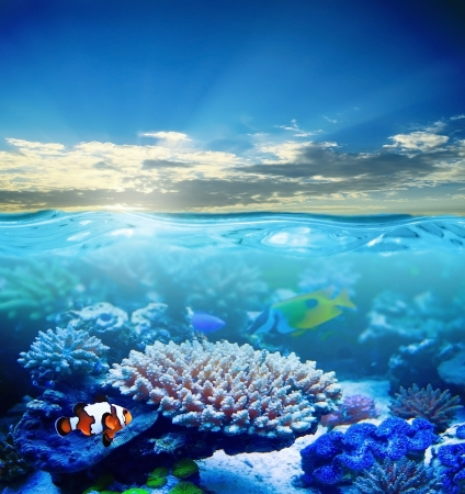 Beautiful sea underwater in sunlight photo