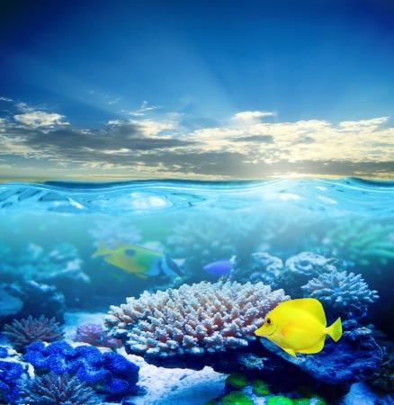 석양 빛에 수중 열대 바다 생활 스톡 콘텐츠