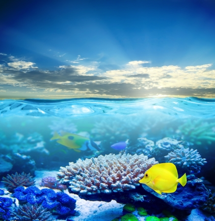 Underwater tropical sea life in sunset light photo
