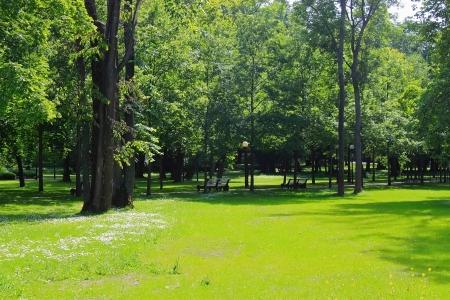 central park: Summer shiny green park