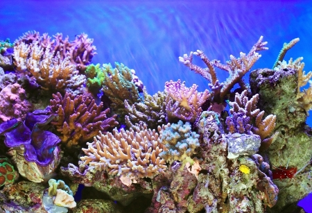marine environment: Tropical ocen underwater with corals and fish Stock Photo
