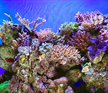 Tropical ocen underwater with corals and fish photo