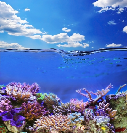 Tropical sea underwater life Stock Photo