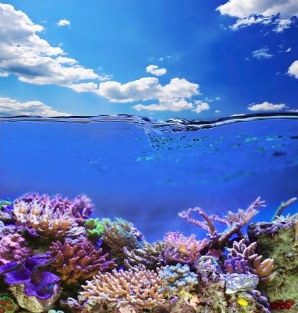 arrecife: Tropical vida marina bajo el agua