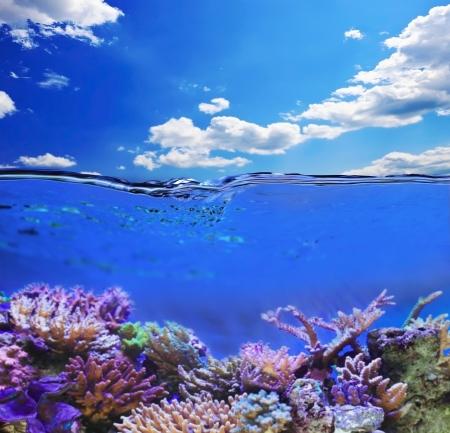 Underwater life Stock Photo - 16999723