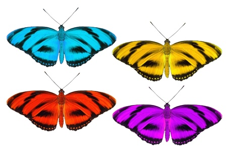 Set of tropic butterfly isolated on white photo