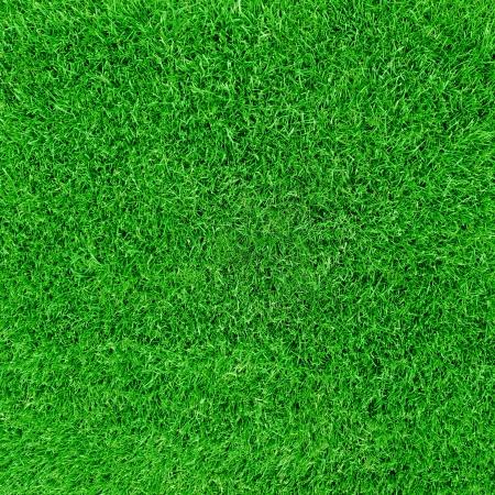 Grean meadow field grass photo