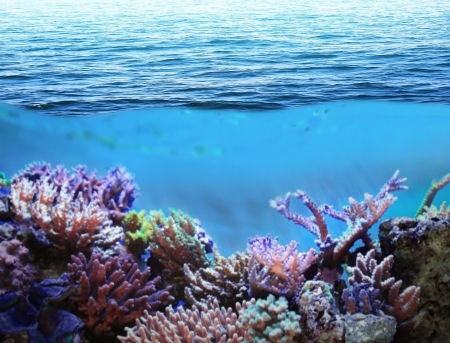 coral sea: Sea underwater and coral reefs on sunny day Stock Photo
