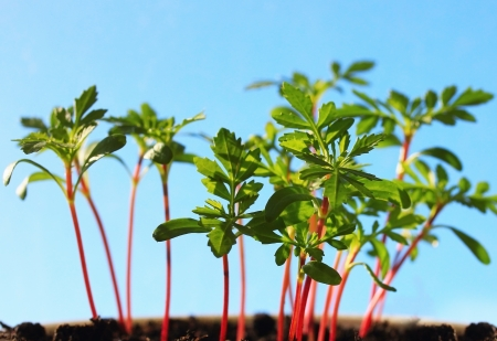 Group of healthy growing plants photo