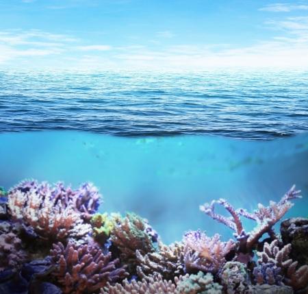 水中の海とサンゴ礁晴れた日に
