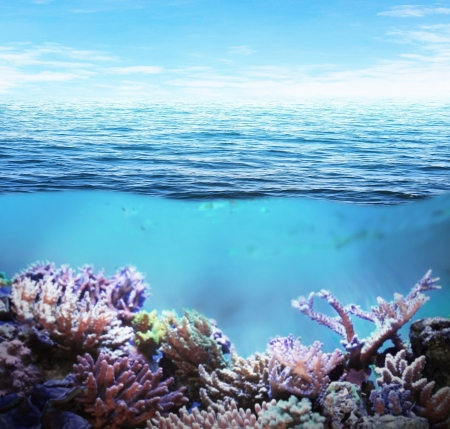 Sea underwater and coral reefs on sunny day photo