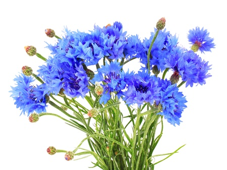 Bunch of cornflowers Stock Photo - 20681429