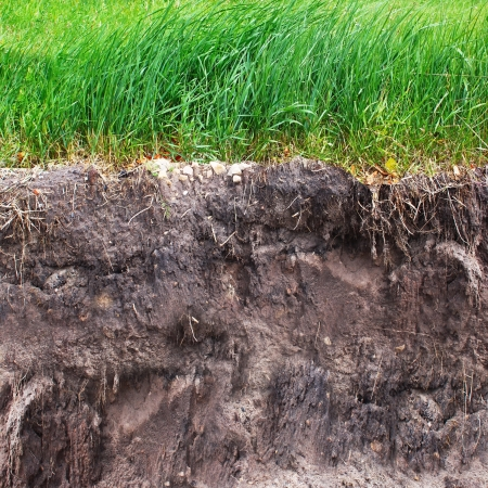 sod: Two levels of grass and soil Stock Photo