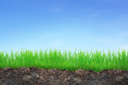 Grass in soil isolated on whiteAbstract nature bokeh Stock Photo