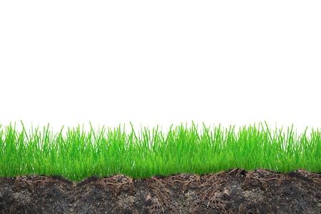 Gras in de bodem geïsoleerd op whiteAbstract natuur bokeh Stockfoto