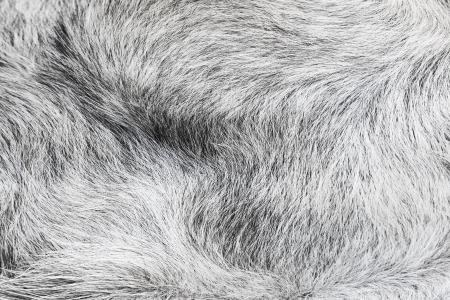 peltry: Animal wool background  Stock Photo