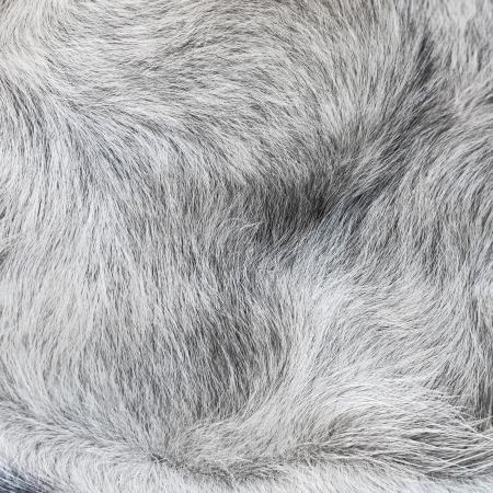 Animal wool background  Stock Photo