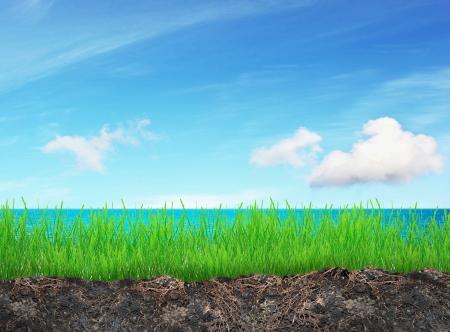berth: Grass fieldr on sunny day near sea Stock Photo