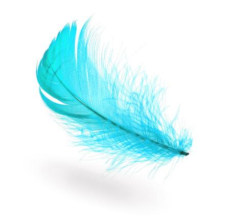 흰색 배경에 그림자와 라이트 블루 비행 깃털
