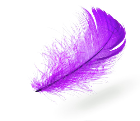 Light blue flying feather with shadow on white background Standard-Bild