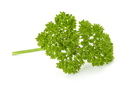 Bunch of parsley on white background photo