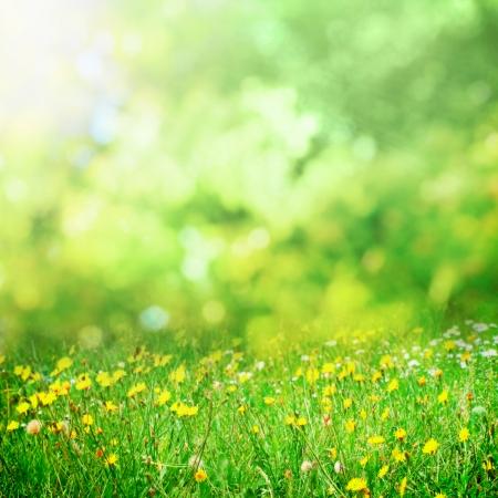 日当たりの良い花の牧草地の背景