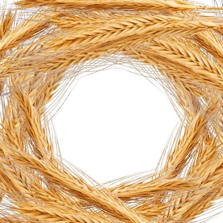 espiga de trigo: Almuerzo del trigo de oro con el espacio balnk