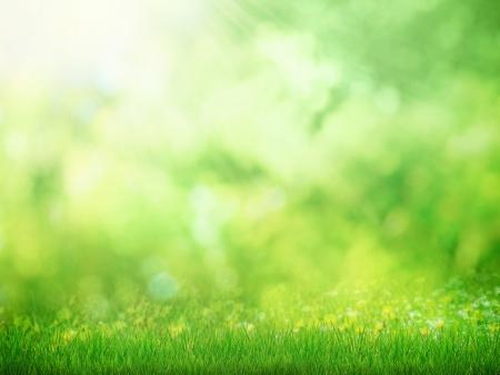 日当たりの良い自然の背景を持つ草グリーン