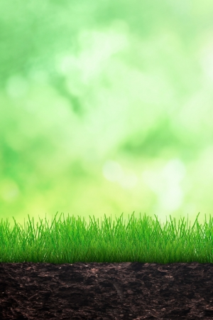 Growing grass in the soil on spring background photo
