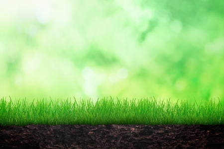 Growing grass in the soil on spring background