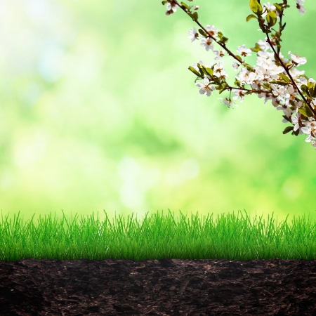 Growing grass in the soilwith cherry brunch Stock Photo - 25229170