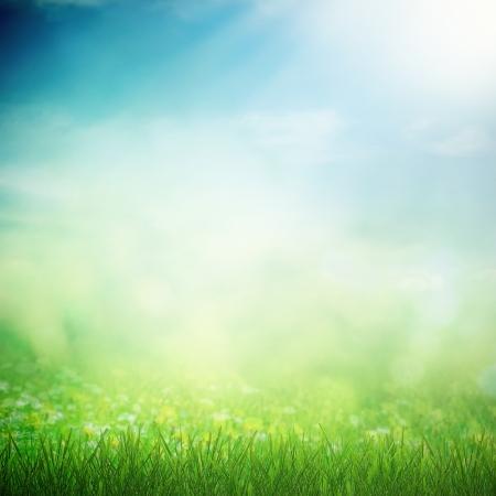 medio ambiente: Cielo de primavera con campo asoleado con el cultivo de flores y la hierba
