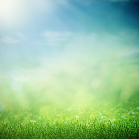 the place is outdoor: Sunny sky with spring field wirh growing flowers and grass