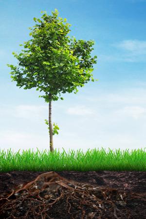 tilo: Árbol de tilo en el suelo en hierba de la primavera y el cielo de fondo