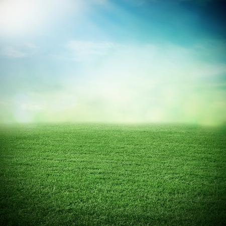 Sport grass field in summer or spring