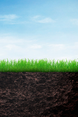 Growing grass in the soil on blue sky background photo