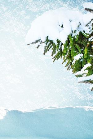 snowdrift: Pine treein snow and snowdrift Stock Photo