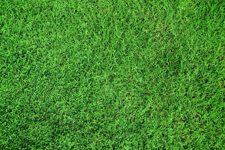 Grass green surface
