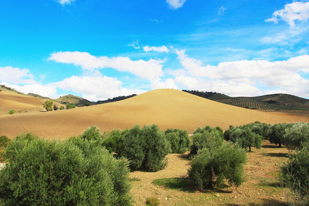 filed: Mountain filed in sunny Andalusia region in Spain