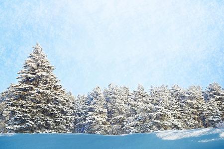 fur trees: Fur trees on snowy winter day
