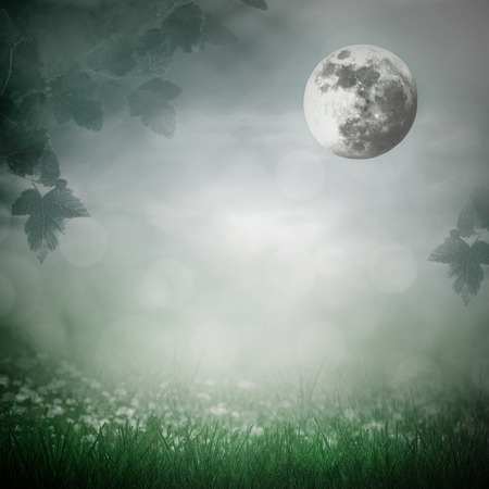 Moonlight in the meadow photo