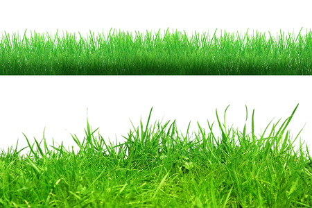 grass roots: Grass in soil isolated on whiteAbstract nature bokeh Stock Photo