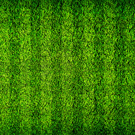 green field: Natural green football field background